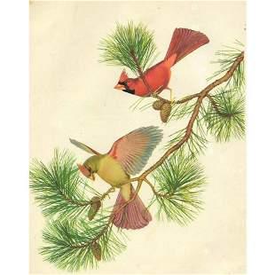 Vintage Menaboni Bird Picture – Cardinal