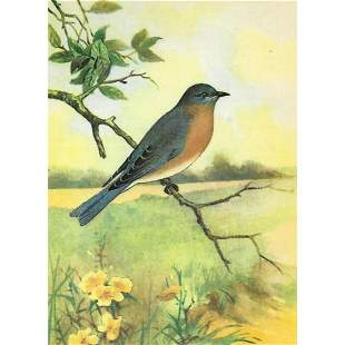 1920's Bluebird Color Lithograph Print
