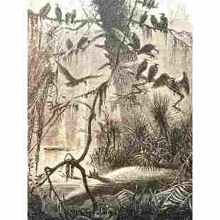19thc Engraving, Vultures in Florida Swamp