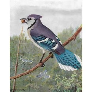 1936 Pearson Birds, Blue Jay