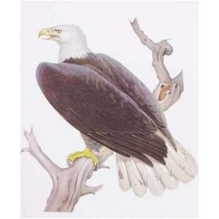 1950 Menaboni Bird Print - Bald Eagle