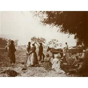 African American History, Civil War Plantation Slaves