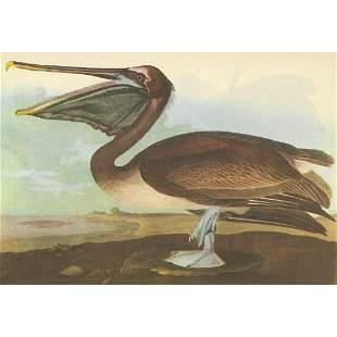 c1946 Audubon Print, #421 Brown Pelican