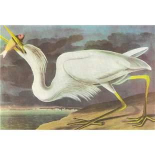 c1946 Audubon Print, #281 Great White Heron
