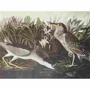 c1946 Audubon Print, #236 Black-Crowned Night Heron