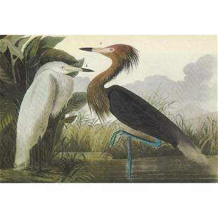 c1946 Audubon Print, #256 Reddish Egret