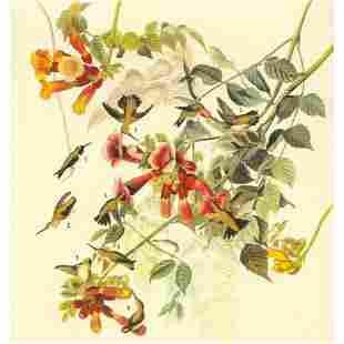 c1946 Audubon Print, #47 Ruby-Throated Hummingbird