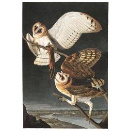 1946 Audubon Print, #171 Barn Owl