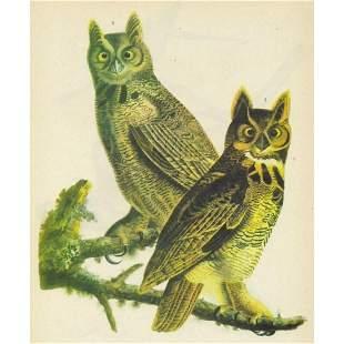 c1946 Audubon Print, #66 Great Horned Owl