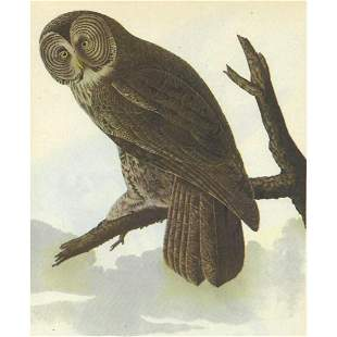 c1946 Audubon Print, #351 Great Gray Owl