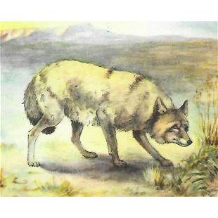 1920's Coyote Color Lithograph Print