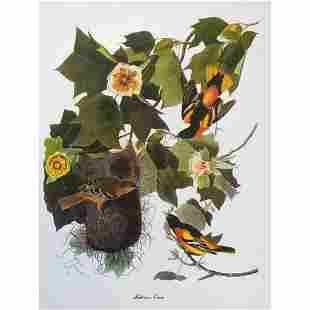 c1950 Audubon Print, Baltimore Oriole
