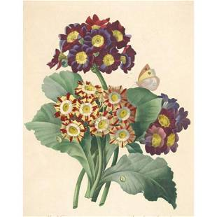 After Pierre-Jospeh Redoute, Floral Print, #111