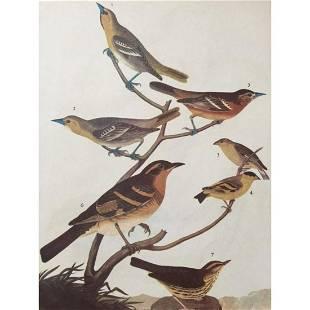c1946 Audubon Print, #433 A Featured Pot-Pourri (