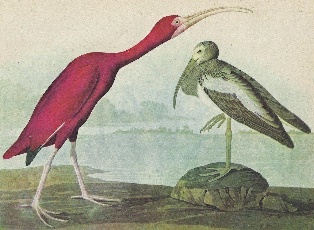 John James Audubon Circa 1946