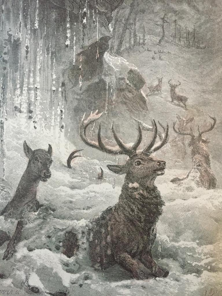 19thc Engraving, Deer Caught in Avalanche
