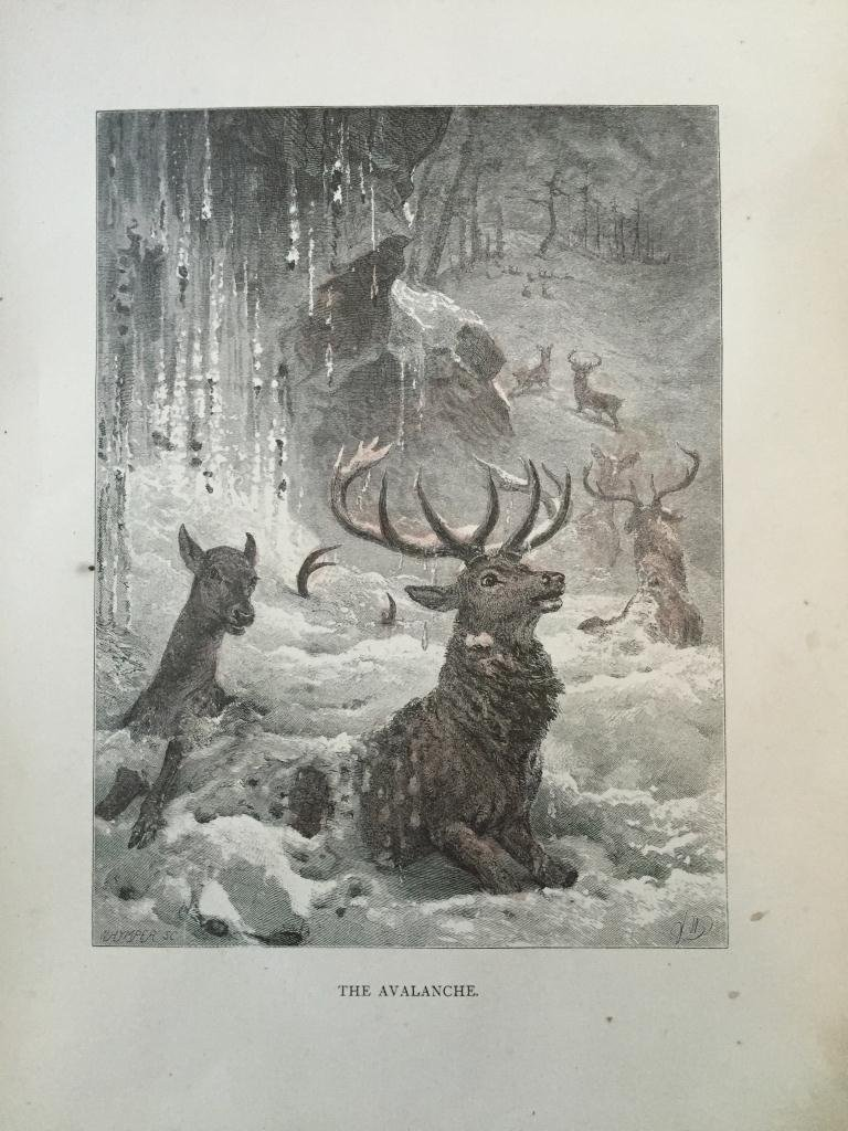 19thc Engraving, Deer Caught in Avalanche - 2