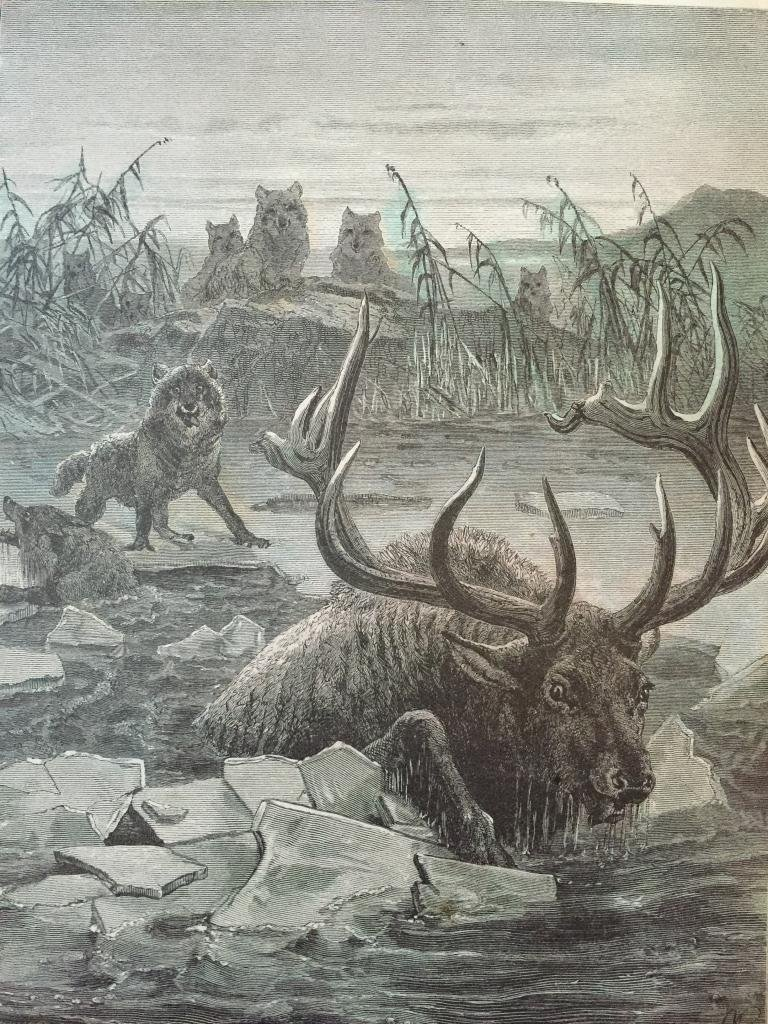 19thc Engraving, Wolves Hunting Stag