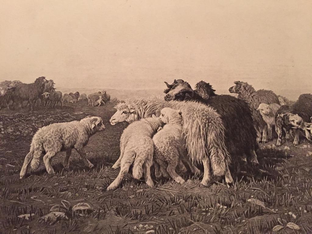 1880's Photogravure, Landscape,Sheep