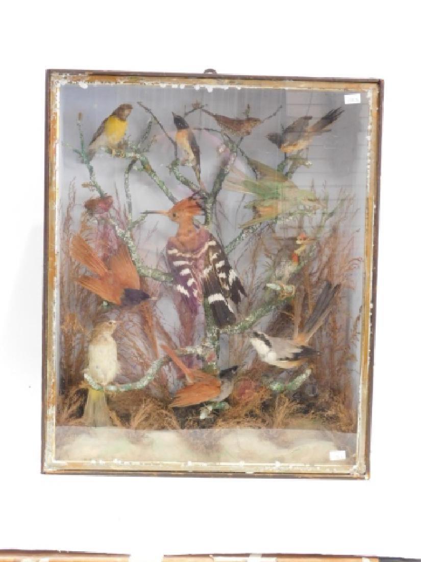 VICTORIAN BIRD SHADOWBOX