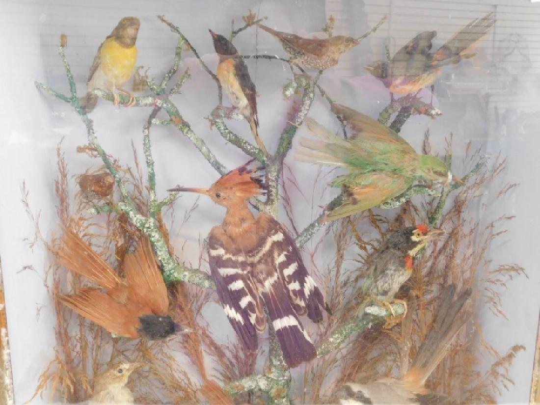 VICTORIAN BIRD SHADOWBOX - 2