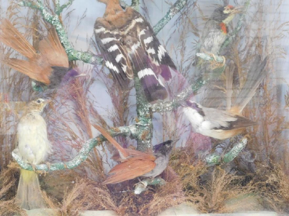 VICTORIAN BIRD SHADOWBOX - 3