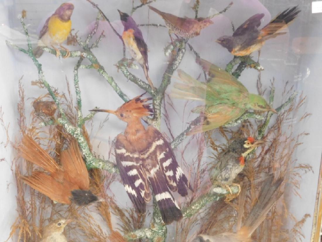 VICTORIAN BIRD SHADOWBOX - 4