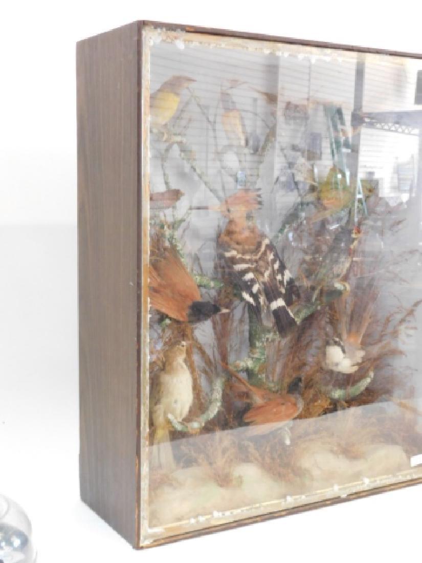 VICTORIAN BIRD SHADOWBOX - 5