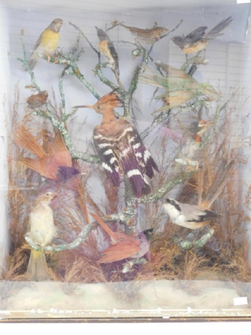 VICTORIAN BIRD SHADOWBOX - 6