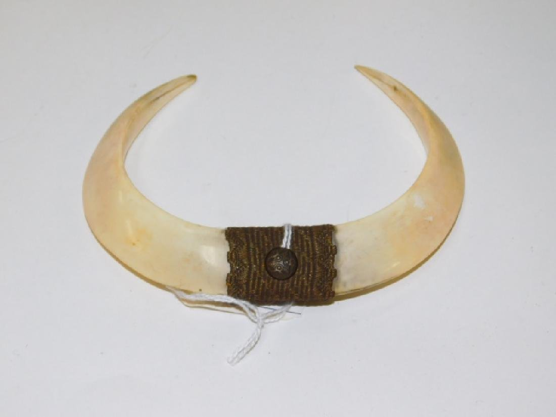 NEW GUINEA WILD BOAR TOOTH NOSE RING