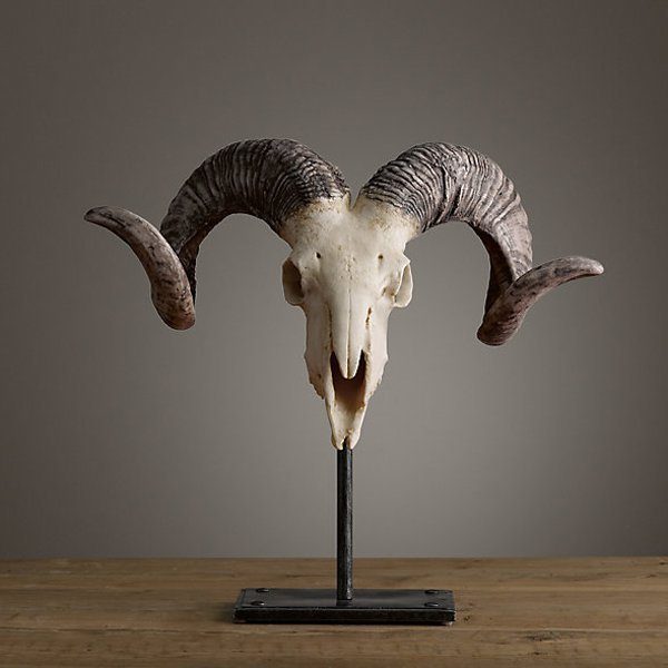 "African Antelope Horn and Skull 29"""