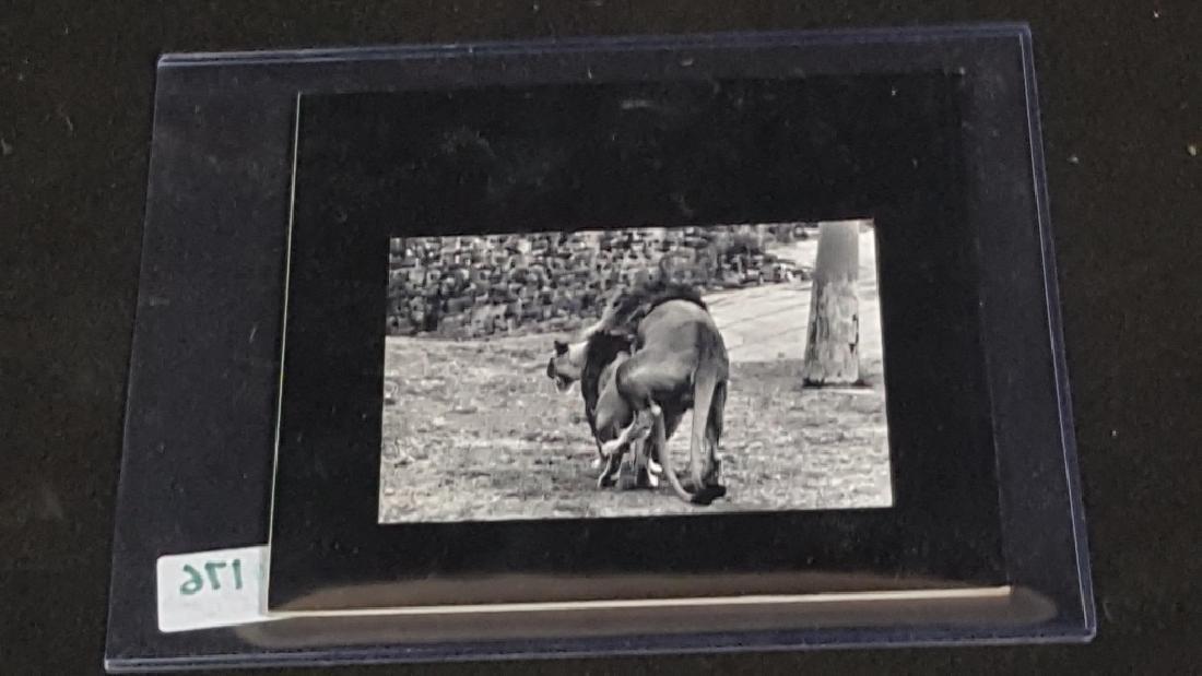 The Animals Garry Winogrand photo book - 2