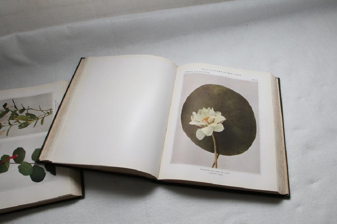 Wild Flowers Of New York, New York State Museum - 6