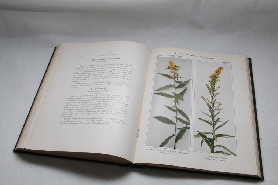 Wild Flowers Of New York, New York State Museum - 7