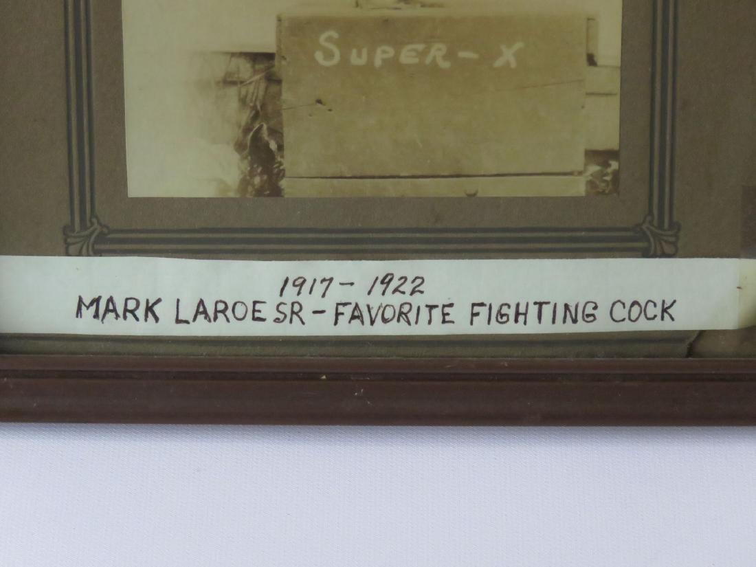 "SEPIATONE PHOTO ""FIGHTING COCK"" MARK LAROE 1900'S - 3"