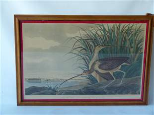 LITHO LONGBILLED CURLEW JJ AUDUBON BY R. HAVELL