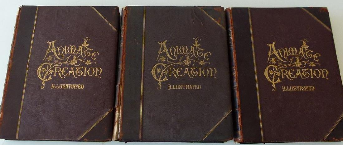 SET (3) VOLUMES ANIMATE CREATION