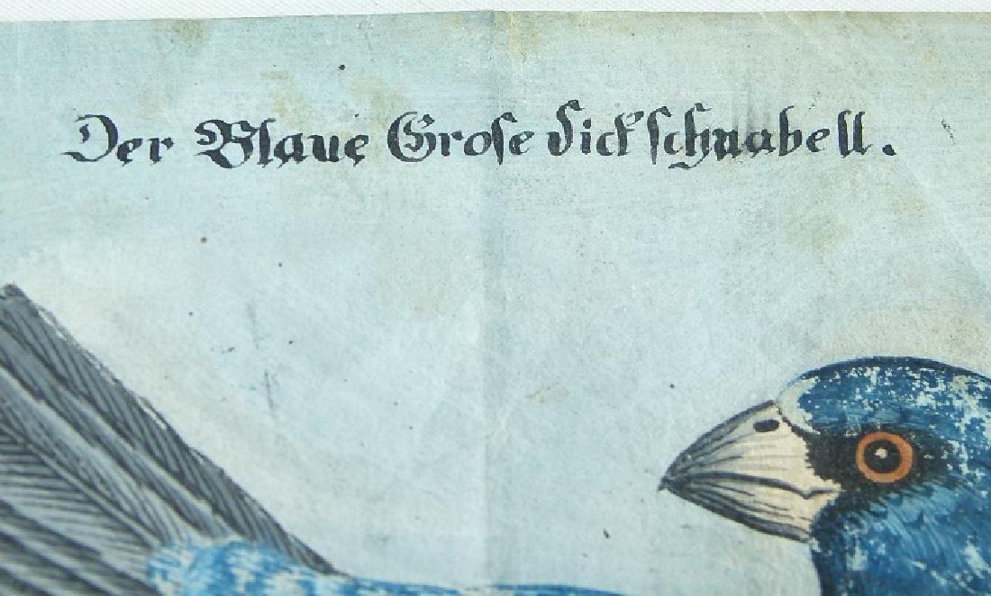 W/C GOUACHE BLUE GROSBEAK ON CHERRY BRANCH - 5