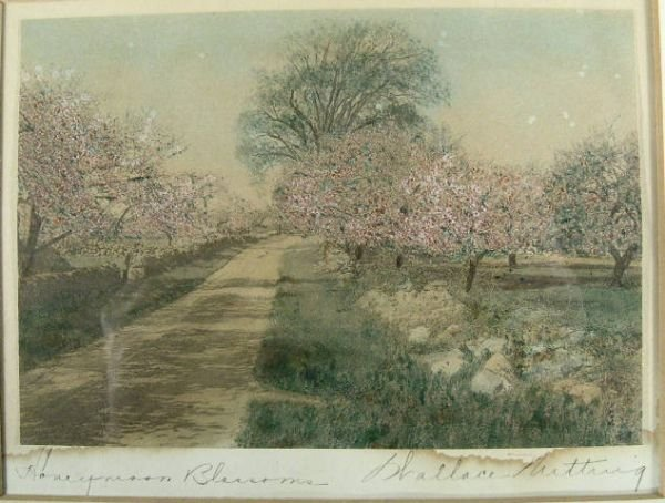 800: Wallace Nutting, HONEYMOON BLOSSOMS