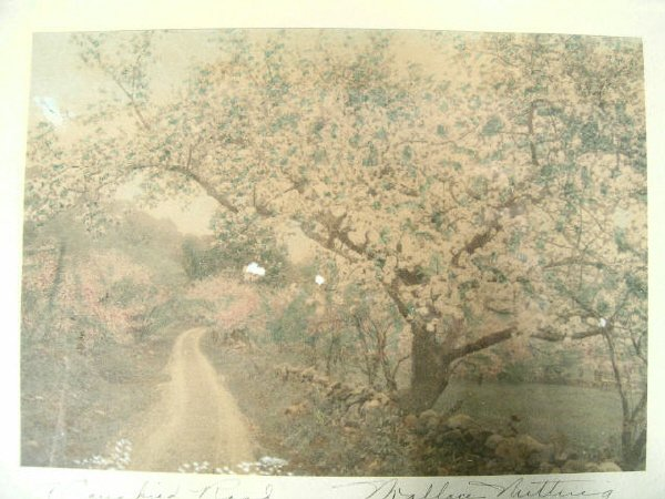 801: Wallace Nutting, A Canopied Road