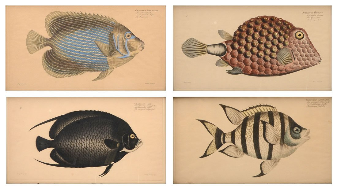 FOUR ANTIQUE FISH PRINTS