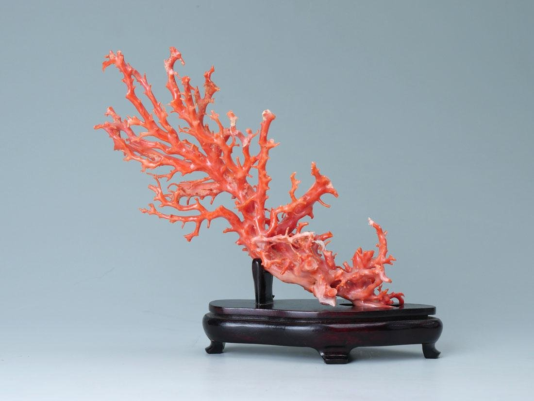 PINK CORAL BRANCH FORMATION