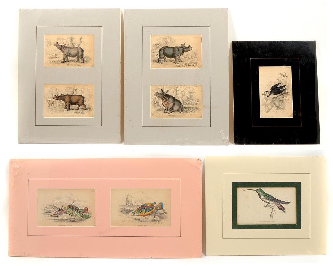 5 LIZARS THE NATURALIST LIBRARY COLORED ENGRAVINGS