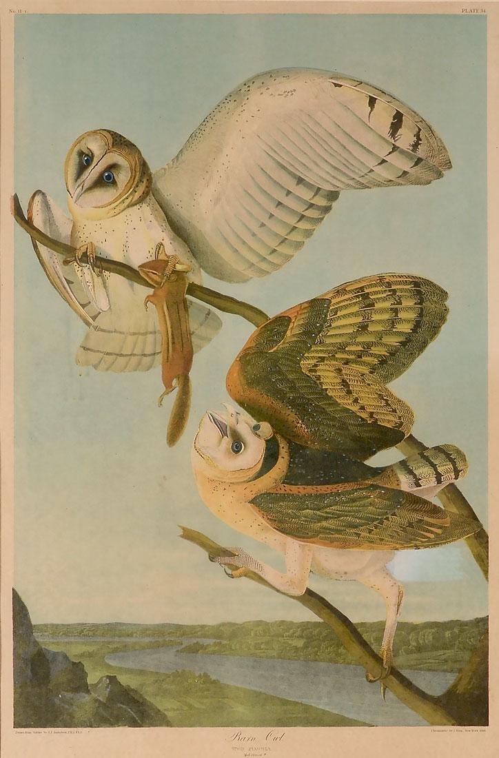 BARN OWL AUDUBON LITHOGRAPH BIEN