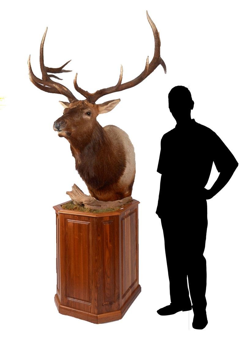 LARGE 14 POINT TAXIDERMY ELK ON STAND