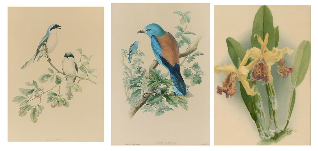 3 PC GOULD AND RICHTER PRINT LOT