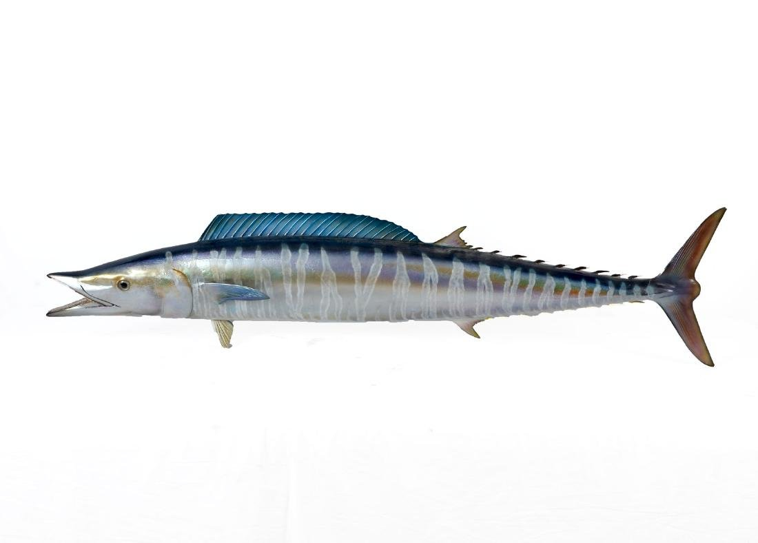 WAHOO FISH WALL SCULPTURE