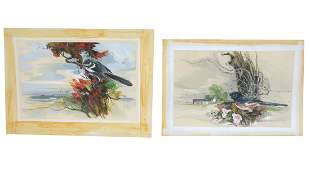 TWO FRANCIS CHASE BIRD ILLUSTRATIONS