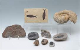 9 PC FOSSIL  SPECIMEN COLLECTION