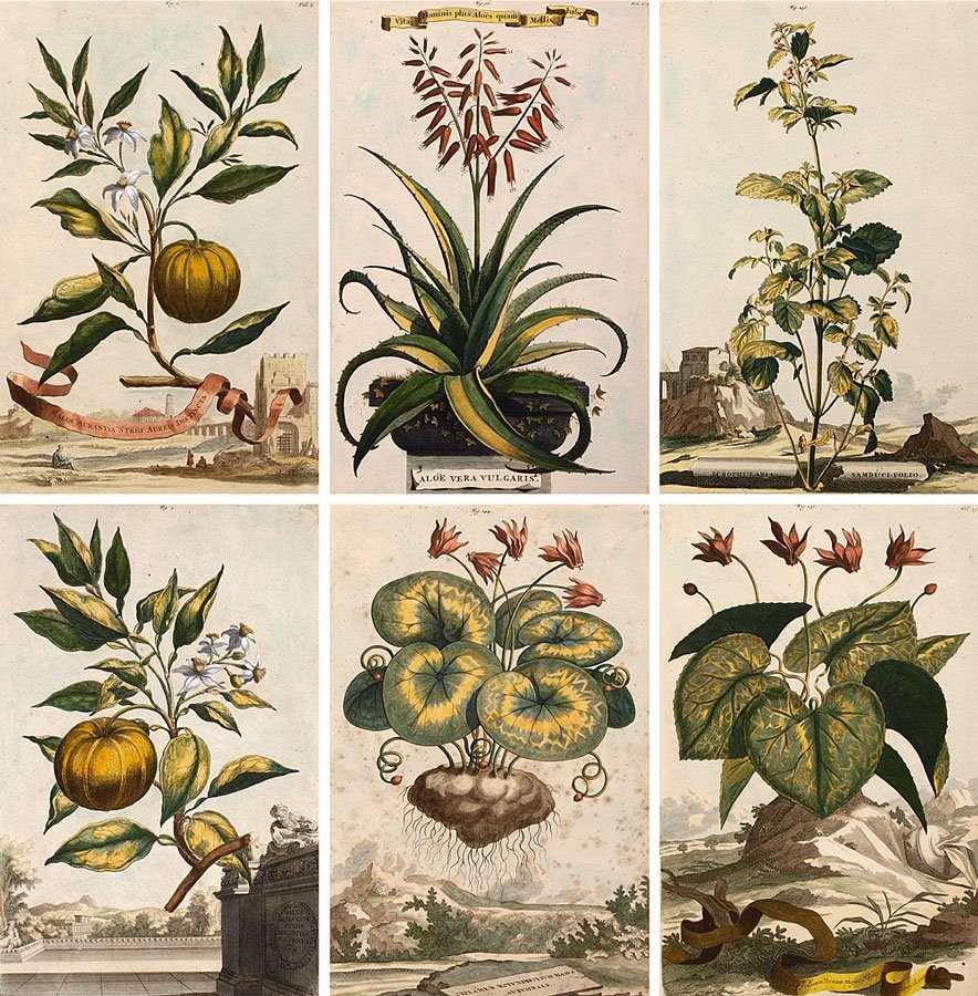 1: COLLECTION OF 6 ABRAHAM MUNTING BOTANICAL ETCHINGS